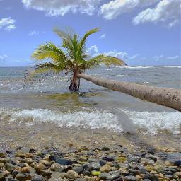 freetoedit myphoto palm beach beachlover nature landscape puertorico picsartshoutout picoftheday photography photographer beautiful sky