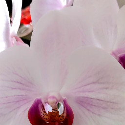 orchidee flower flowerphotography flowerpower flowerart blume blüte inspiration motivation emotion feeling gefühle gefuehle stimmung myphoto myphotography mylife mylove mypicsartgallery picsart freetoedit freetoeditremix freetoeditedited freetoeditcollection