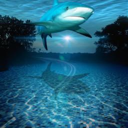 mastershoutout surreal photomanipulation edited underwater road madewithpicsart freetoedit unsplash