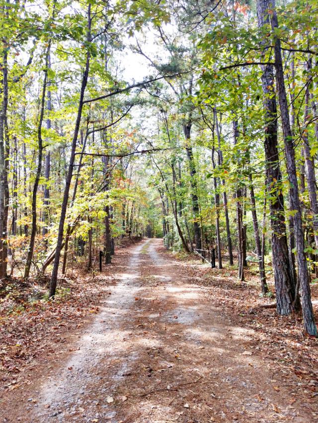 #creative #imagination #outdoors #nature #naturelover #road #trees #myphoto #happy #happiness #sun #sunnyday #travel #october #octobervibes #fall #autumn #fallvibes #adventure #adventuretime