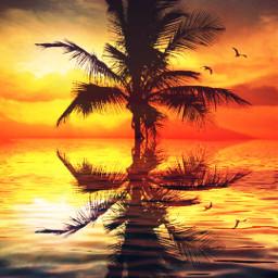 freetoedit palmtrees sunset sky water