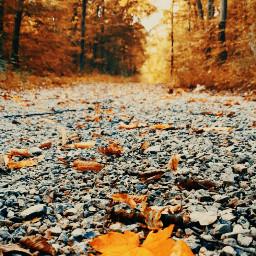 freetoedit photography naturephotography leafs closeup