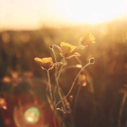 nature countryside plantsandflowers flowers simpleflowers freetoedit