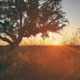 freetoedit lateafternoon countryside thesungoesdown horizon treesilhouette wildplants goldenlight goldenyellow naturesbeauty thesoundsofnature itsallpeacefulandquiet enjoythelittlethingsinlife appreciatenaturearoundyou naturephotography