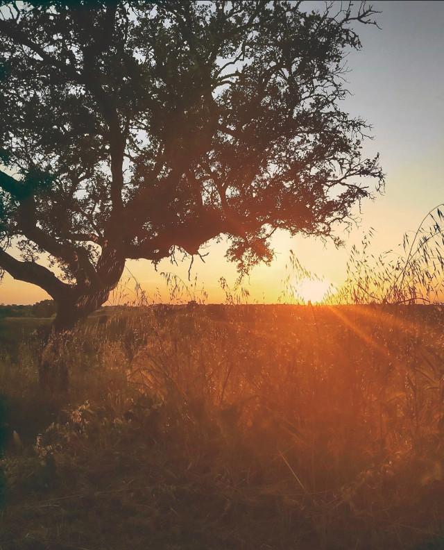 #lateafternoon #countryside #thesungoesdown on the #horizon #treesilhouette #wildplants #goldenlight #goldenyellow #naturesbeauty #thesoundsofnature #itsallpeacefulandquiet #enjoythelittlethingsinlife #appreciatenaturearoundyou  #naturephotography