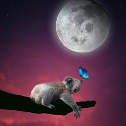 dreamer animallovers kuala moon freetoedit