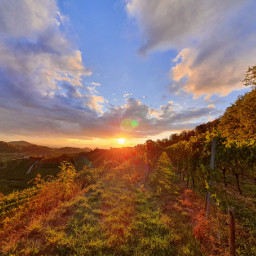 freetoedit sunset sun sunbeams evening light colorful nature mountain vineyard grapevine view scenery landscape valley horizon photography nofilterneeded beautiful clouds awesome mood colors loveit
