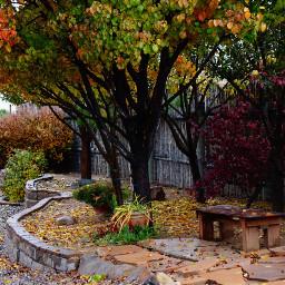 leavesfall autumnflatlay