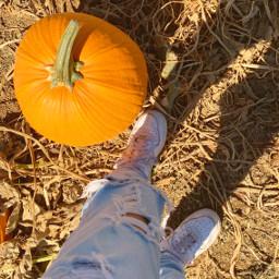 aesthetic fallcolors aestheticfallvibes aestheticfall pumpkinseason aestheticpumpkins fallfeelings fallleaves aestheticwallpaper