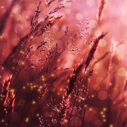 madewithpicsart fireflies bokeh sun freetoedit