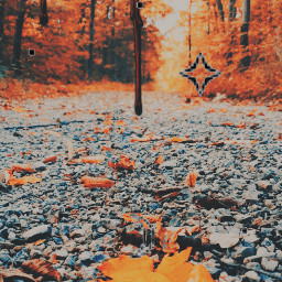 fall fallfashion leaveschanging leavesfall leavesfallen leafy leaves assthetic aesthetic orange autumncolors chill road aesthicorange aestheticsss cute loveit blood drippyart drip dripart aestheticvibes vibes freetoedit