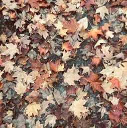 fall autumn autumaesthetic leaves fallbackground freetoedit