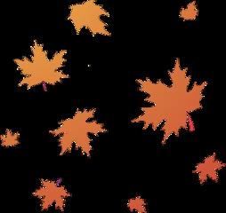 autumn leaves fall fallleaves autumnleaves freetoedit
