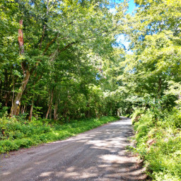 outdoors nature naturelover road trees green myphoto travel happy happiness countryroad adventure adventuretime makeawesome heypicsart summer summervibes freetoedit