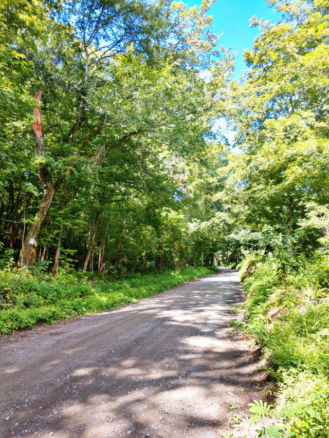 #outdoors #nature #naturelover #road #trees #green #myphoto #travel #happy #happiness #countryroad #adventure #adventuretime #makeawesome #heypicsart #summer #summervibes