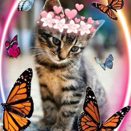 cat_butterfly freetoedit