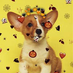 halloweenpuppy cutie puppy corgi freetoedit