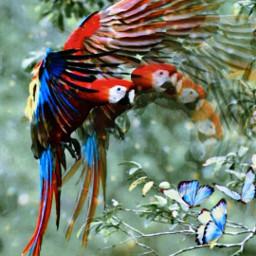 freetoedit motionblureffect parrots colors rcmotioneffect