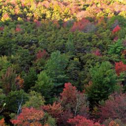 fall fallcolors fallleaves sweaterweather naturephotography sceneryphotography scenery freetoedit