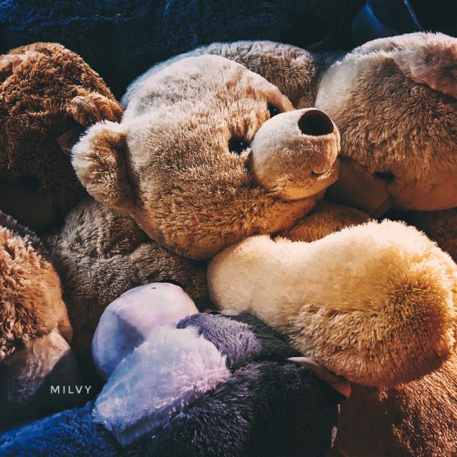"Teddy Bears🧸💛 ""Teddy bears sleep by day. At the night they stay awake to chase away bad dreams"" 🌙 ""Gli orsacchiotti dormono di giorno. Di notte rimangono svegli per scacciare i brutti sogni""⭐️  #shotoniphone #myphoto #myshot #toys #teddybear #peluche #autumn #orsacchiotto #freetoedit"