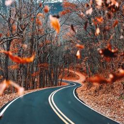 fallaesthetic autumnaesthetic fall autumn aesthetic