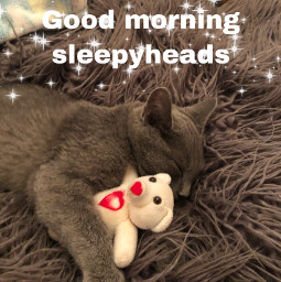 goodmorning kittylove sleepyhead