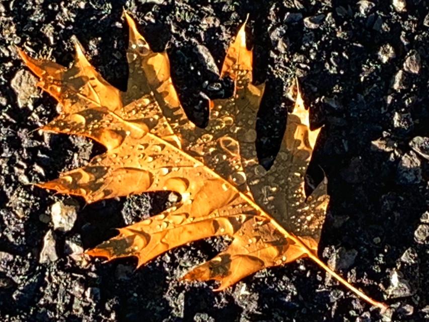 #myphoto#leaf#autumn#fall#dew#freetoedit