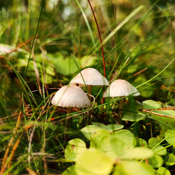 autumn autumnvibes forest mushrooms plant nature beautifulnature myphoto heypicsart picsartmaster freetoedit