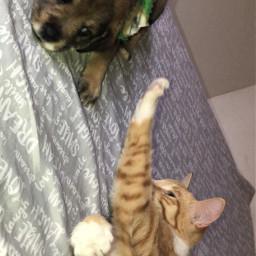 tito cat dog desafio picsart pcmypetsbestportrait mypetsbestportrait
