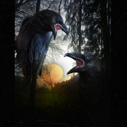 halloween birds forest sunset mystery darkside photoediting editbyme picsarteffects freetoedit