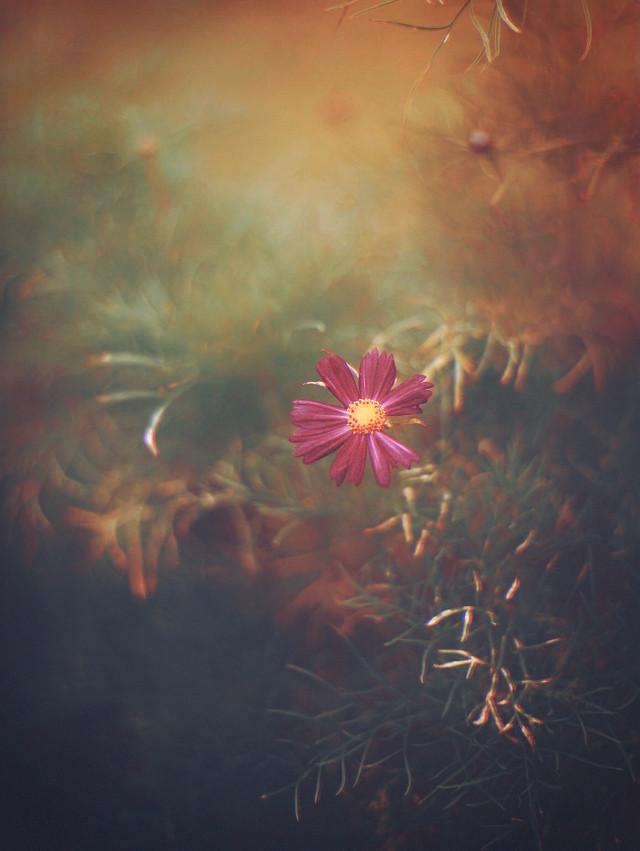 #nature #flower #naturesbeauty #singleflower                                         #simple and #wildflower                                                                               #warmfeels #fallcolors #warmcolors #earthytones #moodyedit #naturephotography                                                                              #freetoedit