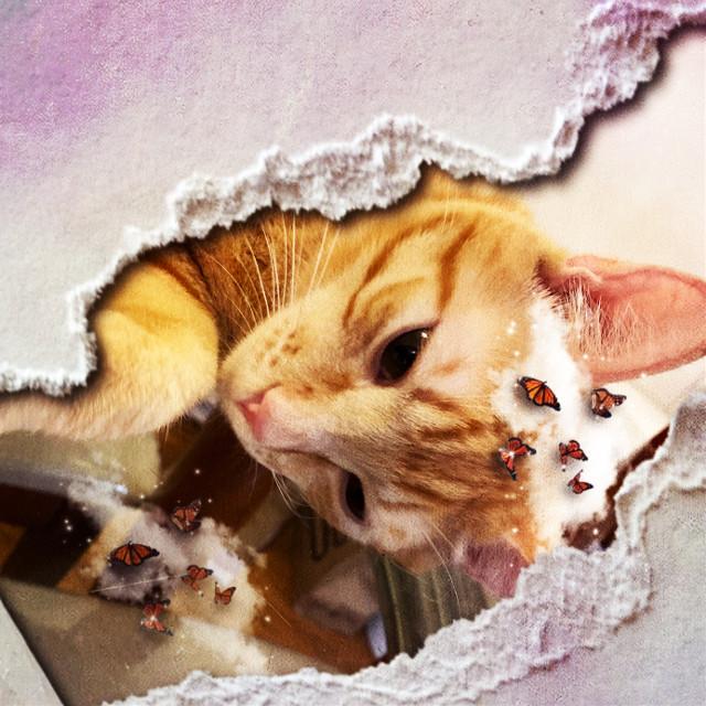 #cat my cat sim sim