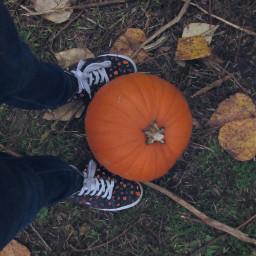 autumn autumnleaves pumpkin orangepumpkin leaves dryleaves dry october octoberseason spookyseason spooky pumpkins orange shoedit shoe shoes srcautumnleaves freetoedit