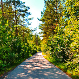 outdoors nature naturelover fall autumn autumnvibes colorful road colorfulleaves myedit adventure sun sunnyday travel naturephotography photography freetoedit