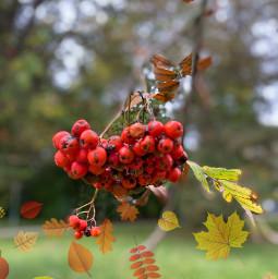 autumn autumncolors freetoedit