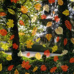 autumncolors srcautumnleaves autumnleaves freetoedit