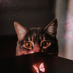 butterfly light cat glitter shine bright animals nature fantasy fantastic awesome amazing madewithpicsart picsartpicks papicks pickme inspiration creative cute nice pet freetoedit