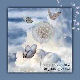 changing dandelion butterfly sky freetoedit