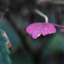 freetoedit kinora autumn leave colorful