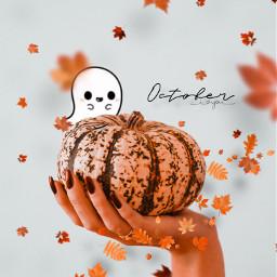 autumnal fall autumndays autumn autumncolors autumnweather fallingleaves loveautumn autumncolours autumnvibes autumn2015 seasons season autumntime fallweather freetoedit