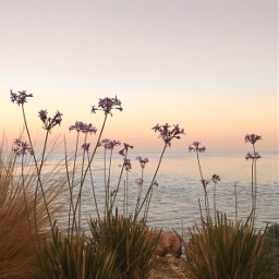 earlyinthemorning sunrise nature morninglight goldenlight freetoedit