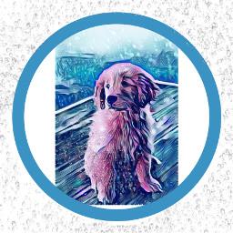 raindog rain dogo