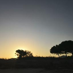 silhouette trees sunrise beach sky autumn swimming photography myphoto freetoedit