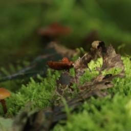 photography mushroom macro closeup mushrooms autumn mushroom🍄 freetoedit