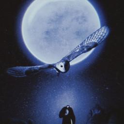 moon owl halloween freetoedit unsplash