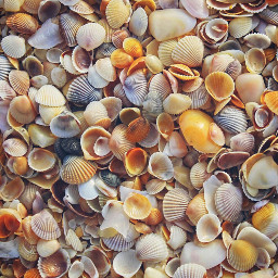 nature bytheseashore seatreasures shells naturesbeauty freetoedit