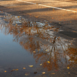 freetoedit myphotography puddle reflections trees road autumn
