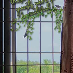 freetoedit birds window creepers homebuddies