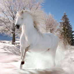 horse winter pferd freetoedit