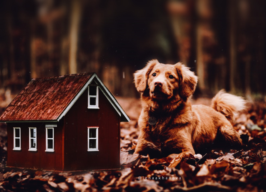 house in the woods .... #autumn  #dog #home #fareast    — — Thanks for the beautiful photo ! 🙌🏻👋🏻🏚🍂🍁 —